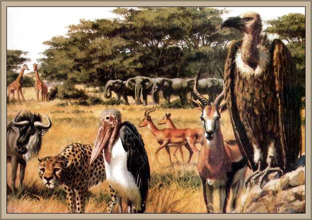 http://historiaybiografias.com/archivos_varios5/fauna_sabana.jpg