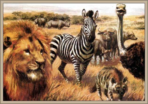 http://historiaybiografias.com/archivos_varios5/fauna_sabana1.jpg