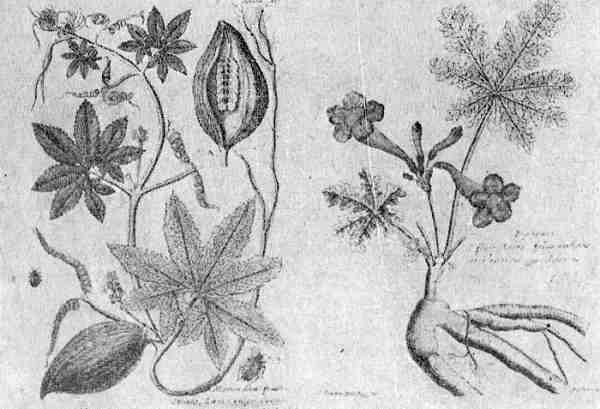 botanica dibujos