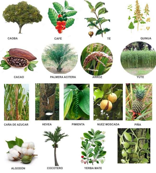Plantas Que Habitan en los Trópicos