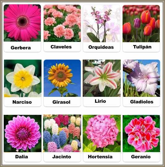 imagenes de flores en la sopa de letras