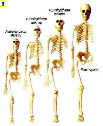 postura homo sapiens