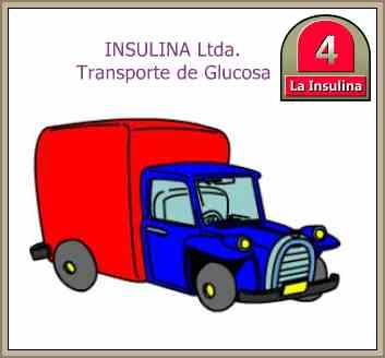 transporte de insulina
