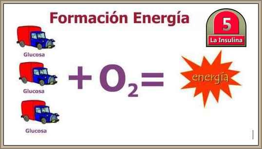 formcion de la energia en el cuerpo humano