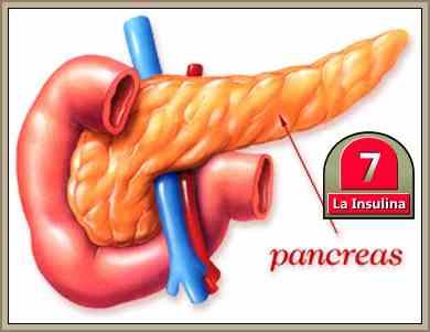 el pancreas y la insulina