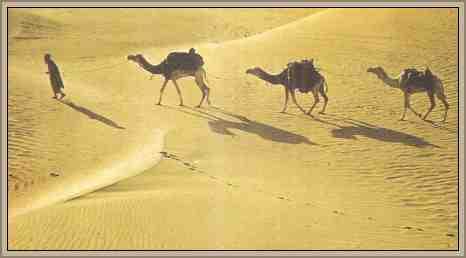caravana de camellos desierto