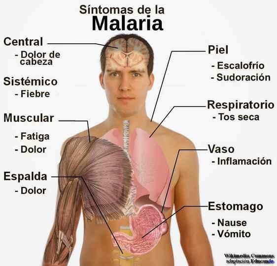 informacion de la malaria