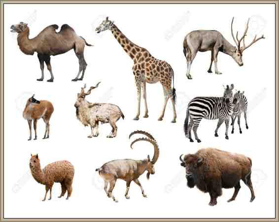 mamiferos reino animal