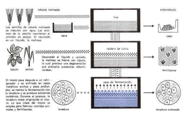 esquema proceso fabricacion de la cerveza