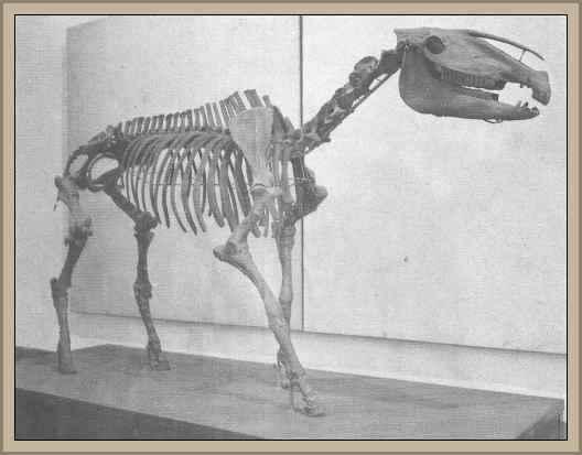 caballo fosil de Muñiz