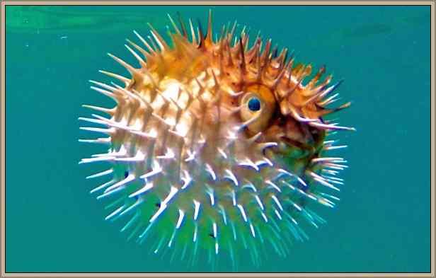 peces agresivos y mas temidos