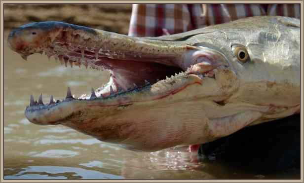 reptiles  peligrosos y mas temidos