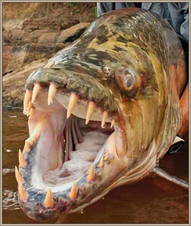 peces peligrosos y mas temidos