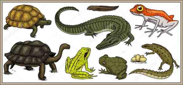 reptiles reino animal cuadro
