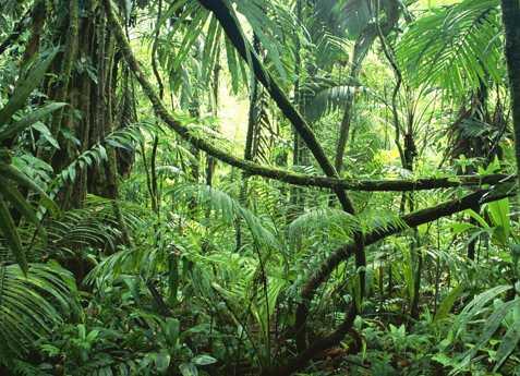 Selva Virgen