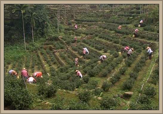 taiwan recurso natural tierra