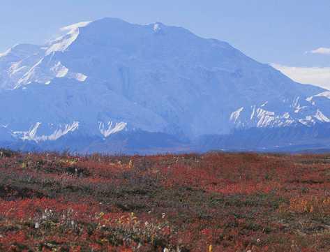 Tundra artico