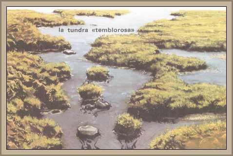 Tundra en America