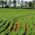 La Agricultura en el Mundo Modernizacion Organizacion Caracteristicas