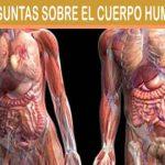Porque engordamos fácilmente? Predisposición a Engordar Metabolismo