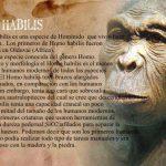 Homo Habilis Caracteristica Cerebro Huesos Altura La Evolución Humana