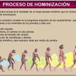El Proceso de Hominización Concepto Evolutivo del Hombre